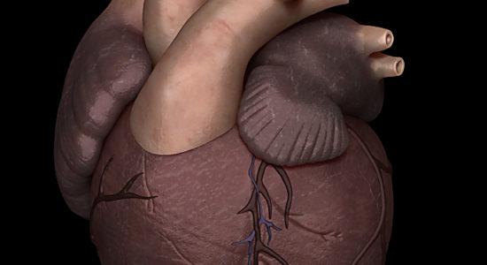 Coeur vision médicale